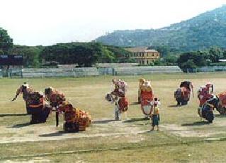 象のダンス祭り