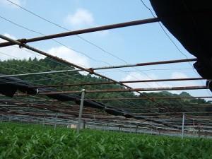2010東平