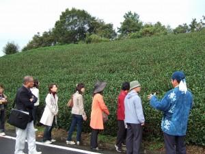 2010茶摘2