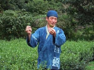 2010茶摘4