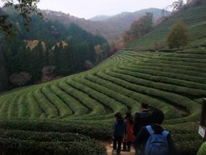 2010韓国茶2