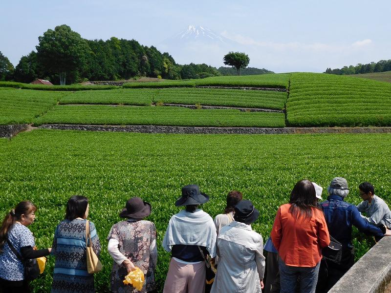富士山と茶畑 ビュースポット