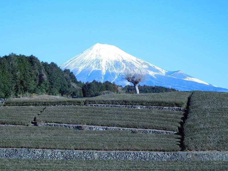 1.24 笹葉富士山